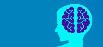 2021-自學課程-系統神經科學(7-12月)